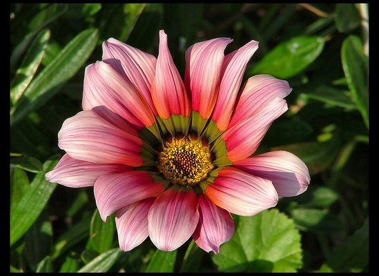 Une fleur d`automne.