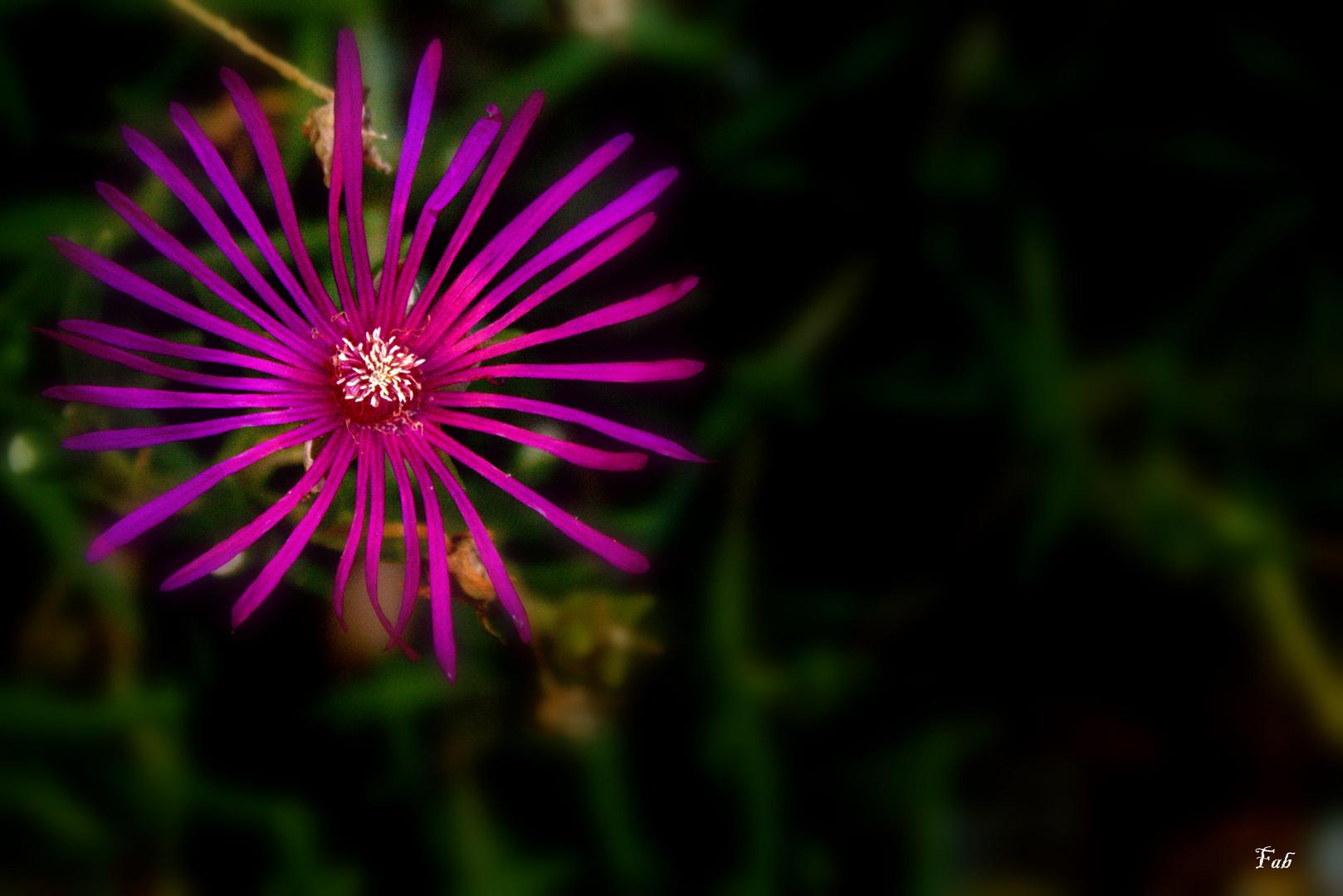 Une fleur hors des ténèbres