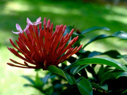 une fleur parmis la nature...