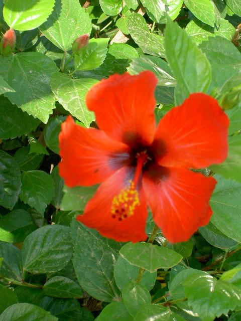 une fleur parmis les fleurs