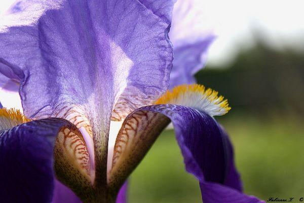 une fleur pour  Dimanche