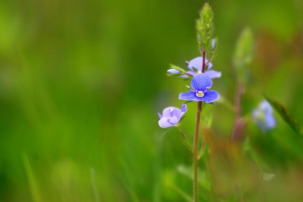 une fleur, tout simplement