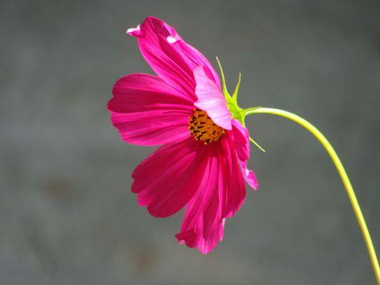une fleur, une vie sur terre