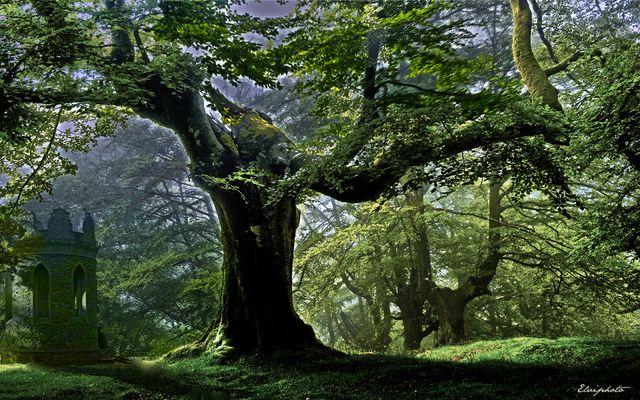 une forêt magique