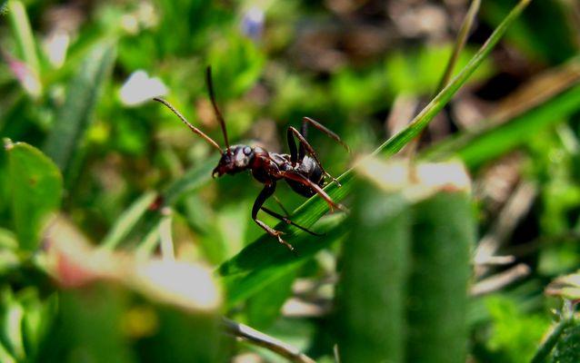 Une fourmi qui prends la pose...