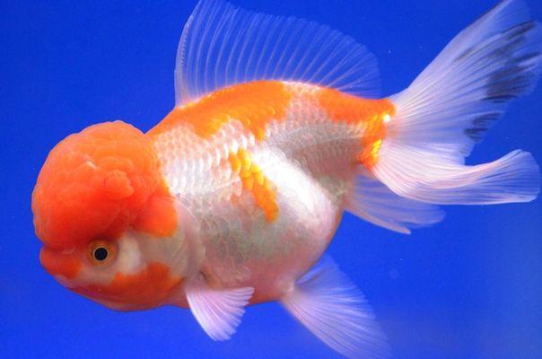 Une grosse bosse pour le petit poisson!