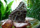 Une gâterie dans la volière de Papillons;