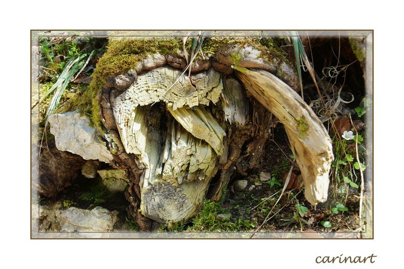 Une gueule de bois / Ein Maul aus Holz