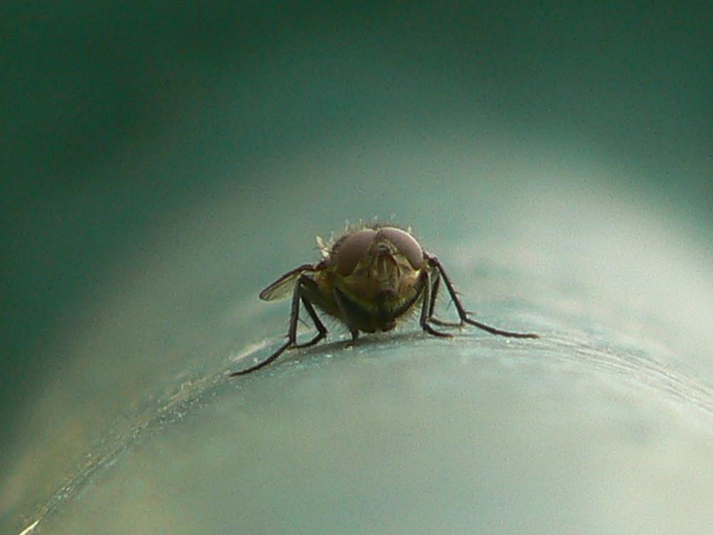une image qui fait .............. mouche !!!