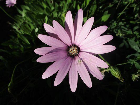 ..Une intruse sur cette belle fleur..