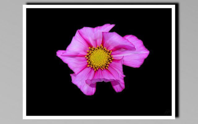 une jolie fleur