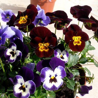 une jolie petite fleur