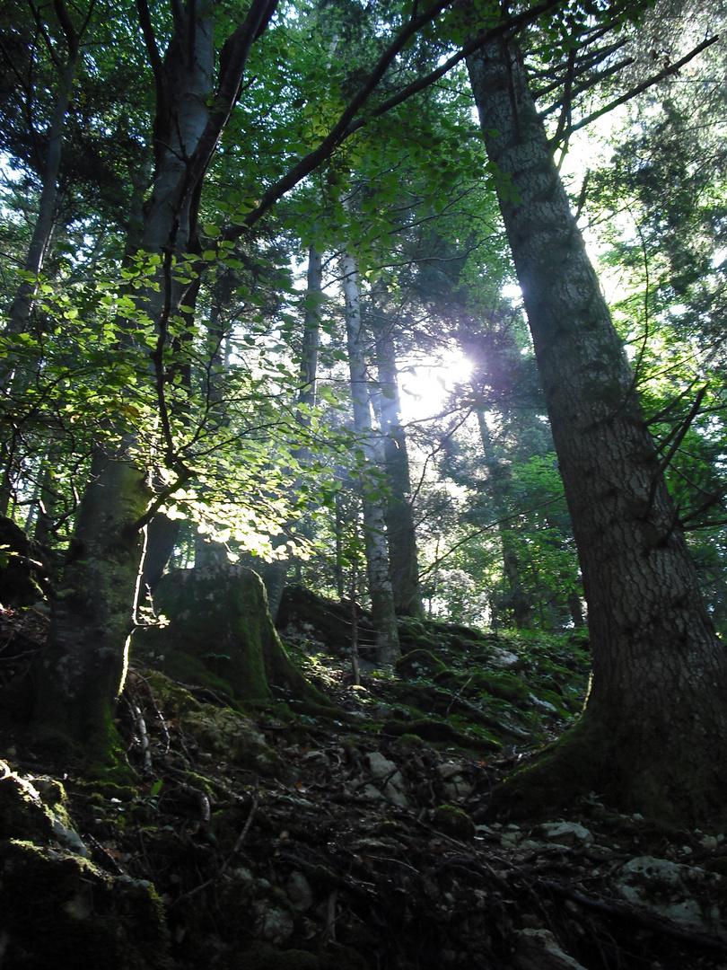 une lueur dans la forêt