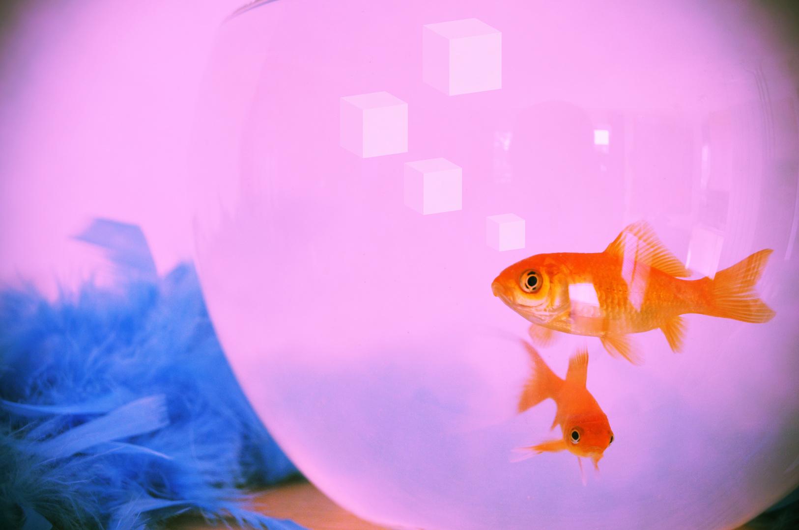 Une mémoire de poisson