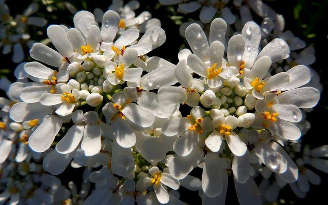 Une mosaique de petites fleurs....