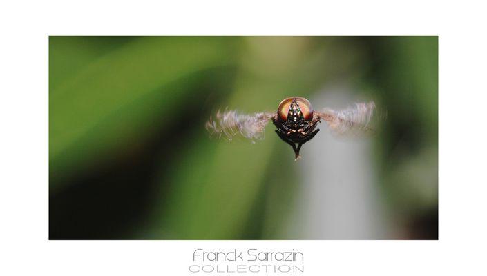 Une mouche.. En plein vol
