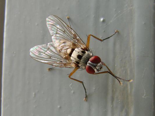 Une mouche sur un mur qui picotte sur pain dur...