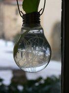 Une nouvelle idée de soliflor , les vieilles ampoules !