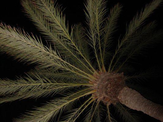 Une Nuit Sous un palmier