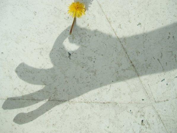 Une ombre