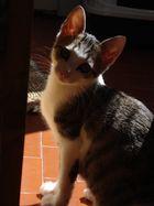 une ombre passe...le chat lui s'en prélasse...