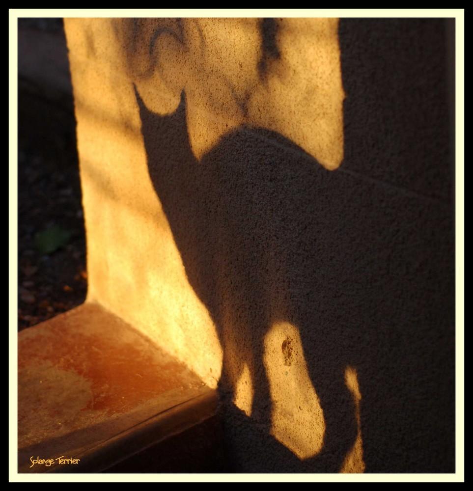 une ombre sur un mur...à l'aube