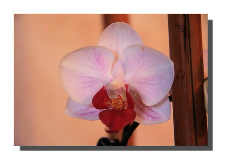 une orchidée pour le week-end!