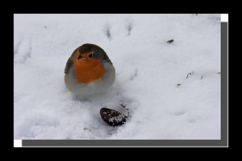 une partie de boules de neige?