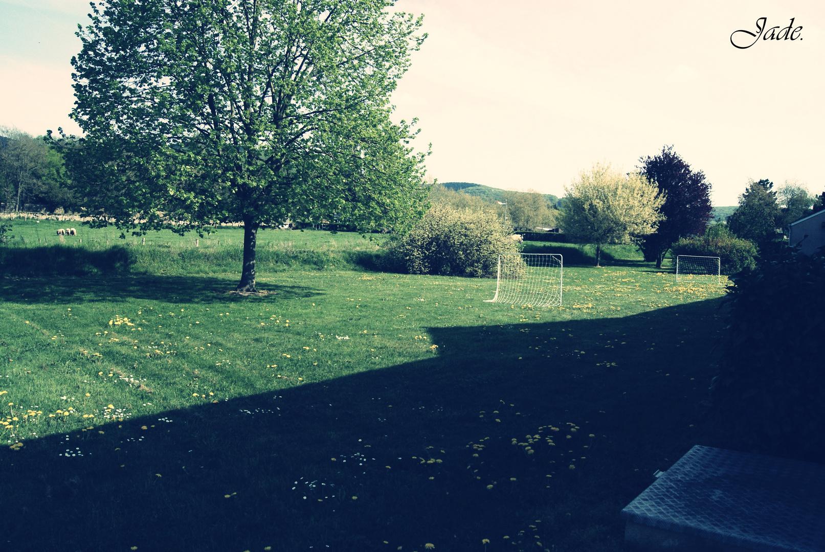 Une partie de mon jardin.