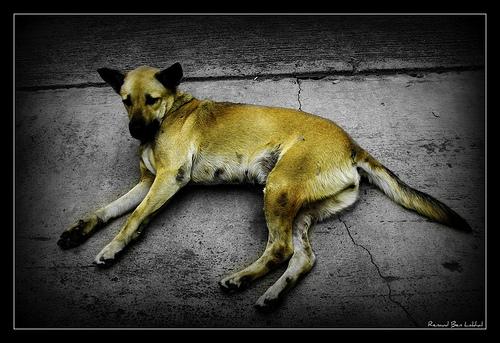 Une pause de chien