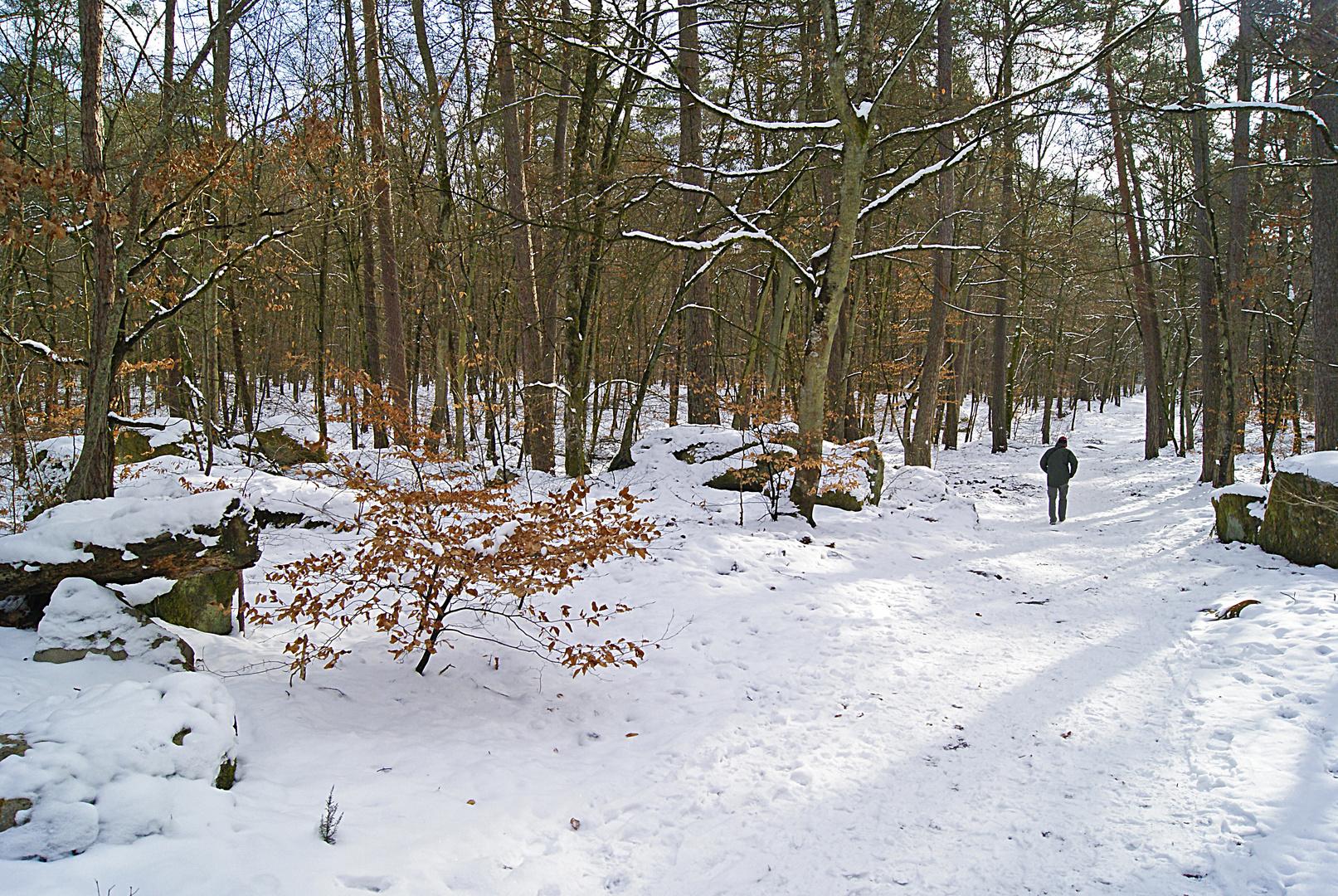 une petite balade en forêt de Fontainbleau