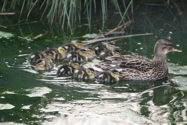 une petite famille