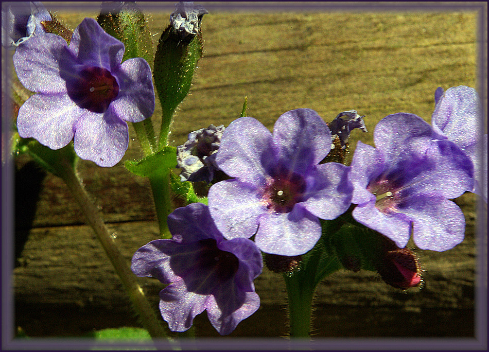 une petite fleur dans mon jardin