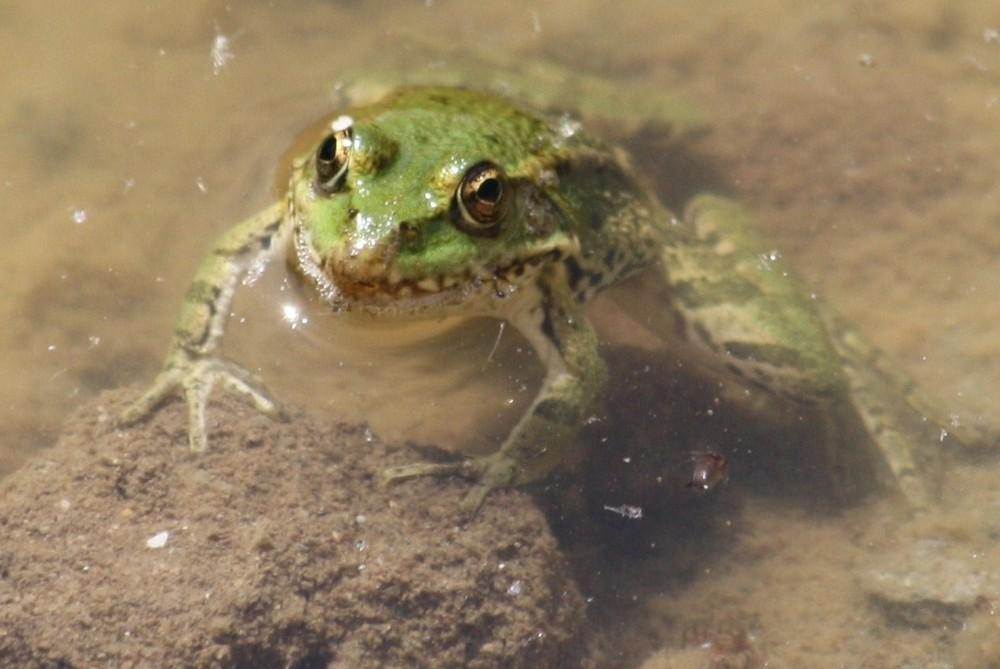 une petite grenouille