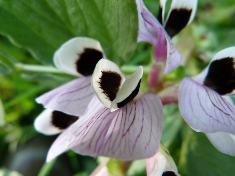 une petite macro de fleur