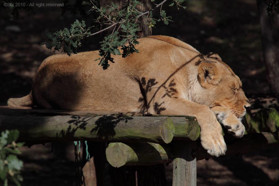 ...une petite sieste !...