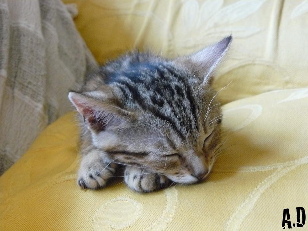Une petite sieste ne peut pas faire de mal ! (j'ai rien trouvé d'autre comme titre...)