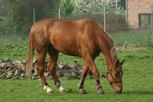 Une photo qui a du cheval?