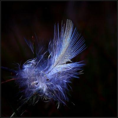 Une plume dans la nuit...