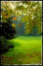Une prairie d'automne / Eine Herbstwiese