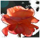 une rose chez Mireille