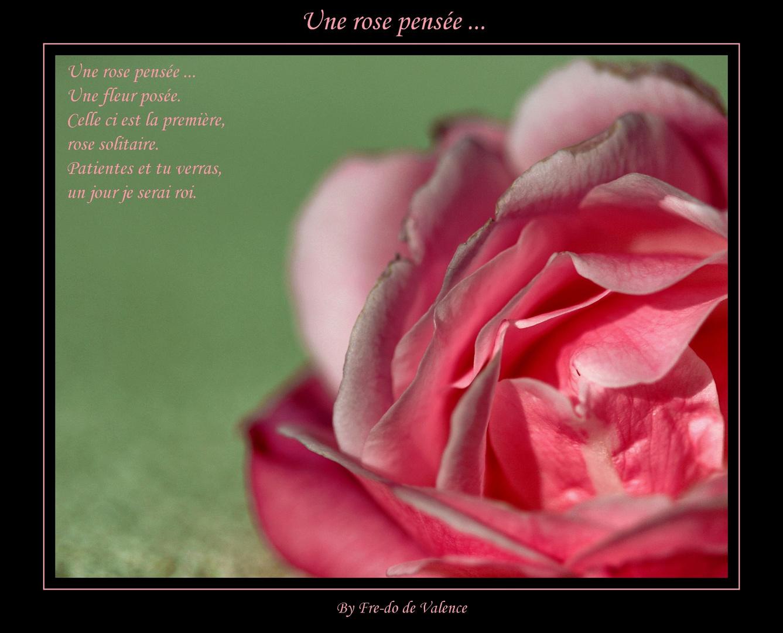 une rose pensée ...
