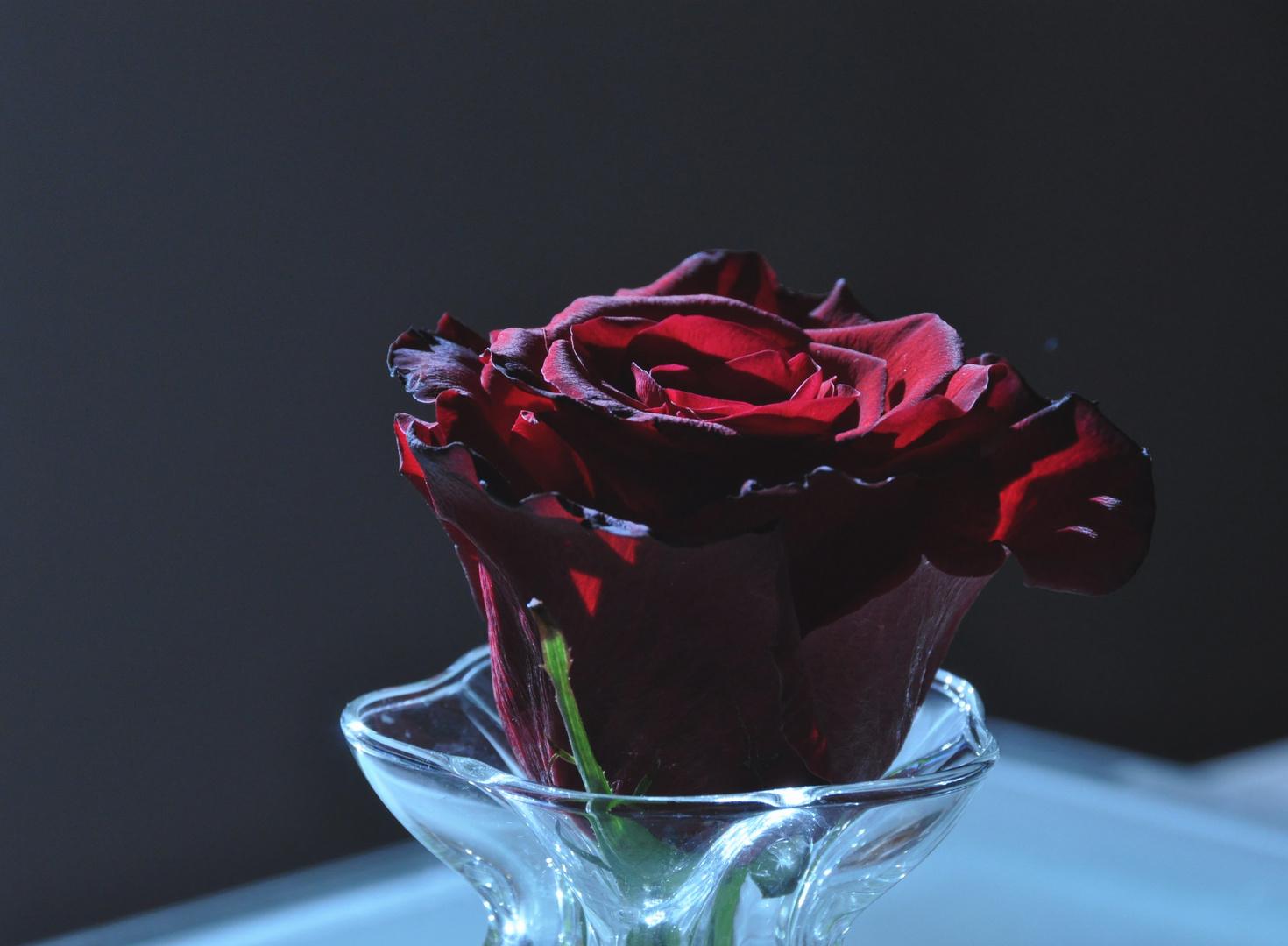 Une rose pour...