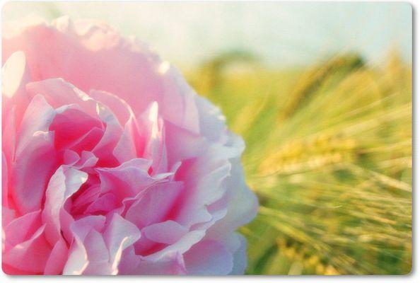 Une rose sauvage , une femme libre.