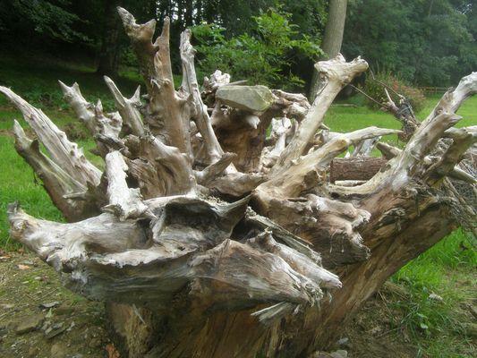 Une sculpture sortie de terre