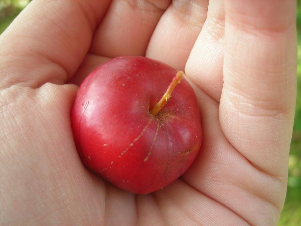 Une si petite pomme .
