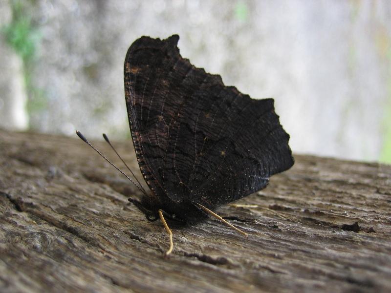 Une sieste de papillon
