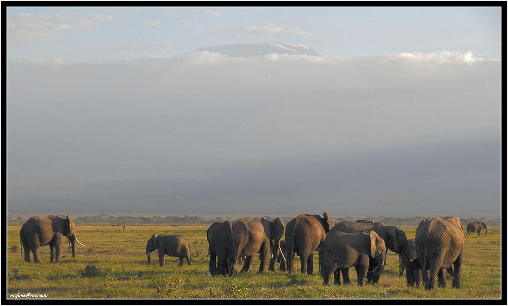 Une soirée à Amboseli
