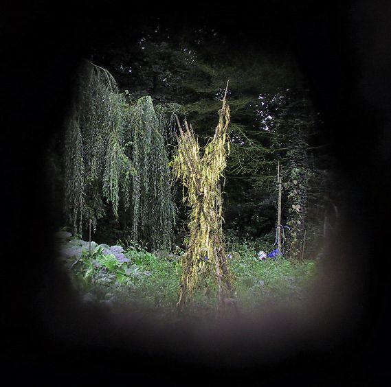 Unerlaubter Einblick in einen verwunschenen Garten