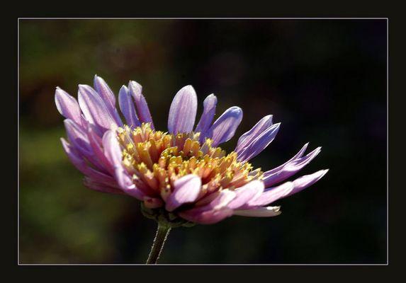 Unermüdliches Blühen